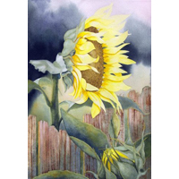 """Sunflower""  by Keith Davidson - Watercolor"